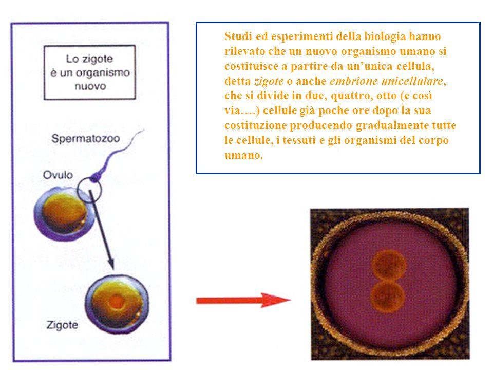 Studi ed esperimenti della biologia hanno rilevato che un nuovo organismo umano si costituisce a partire da ununica cellula, detta zigote o anche embr