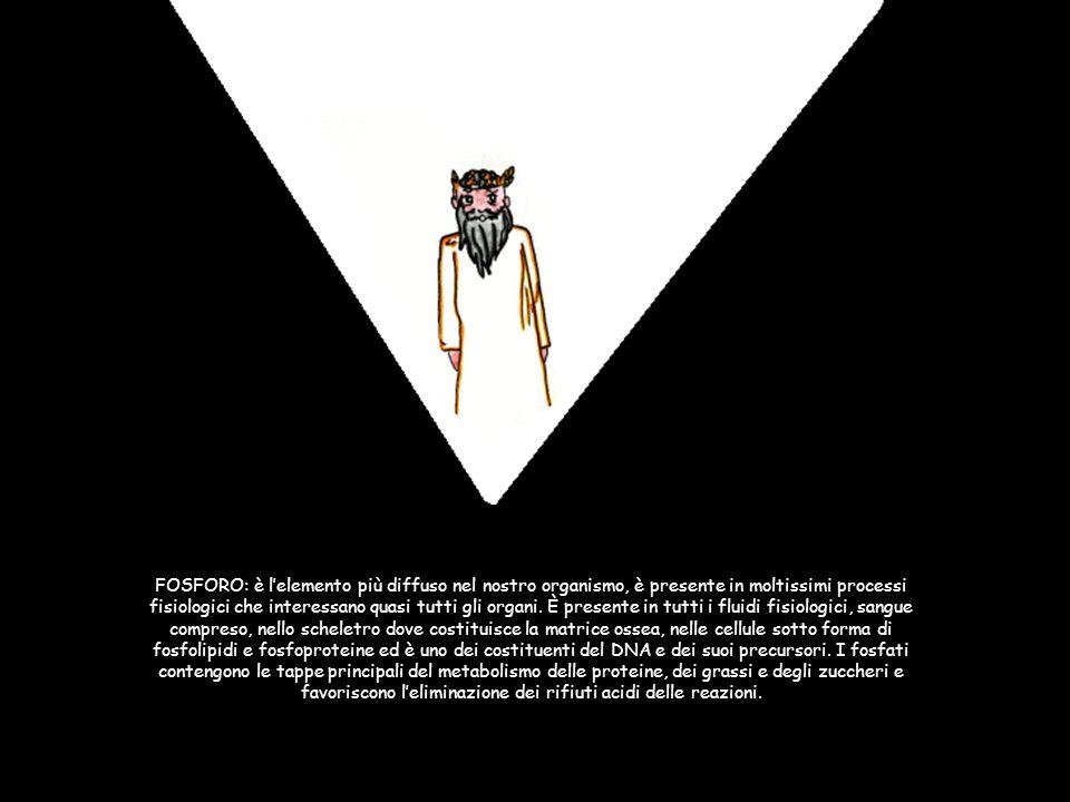 FOSFORO: è lelemento più diffuso nel nostro organismo, è presente in moltissimi processi fisiologici che interessano quasi tutti gli organi. È present