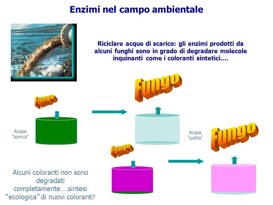 Enzimi nel campo ambientale Riciclare acque di scarico: gli enzimi prodotti da alcuni funghi sono in grado di degradare molecole inquinanti come i col