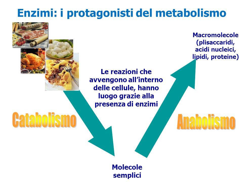 Molecole semplici Macromolecole (plisaccaridi, acidi nucleici, lipidi, proteine) Le reazioni che avvengono allinterno delle cellule, hanno luogo grazi