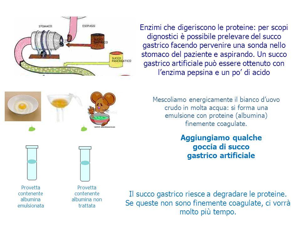 PEPSINA Enzimi che digeriscono le proteine: per scopi dignostici è possibile prelevare del succo gastrico facendo pervenire una sonda nello stomaco de