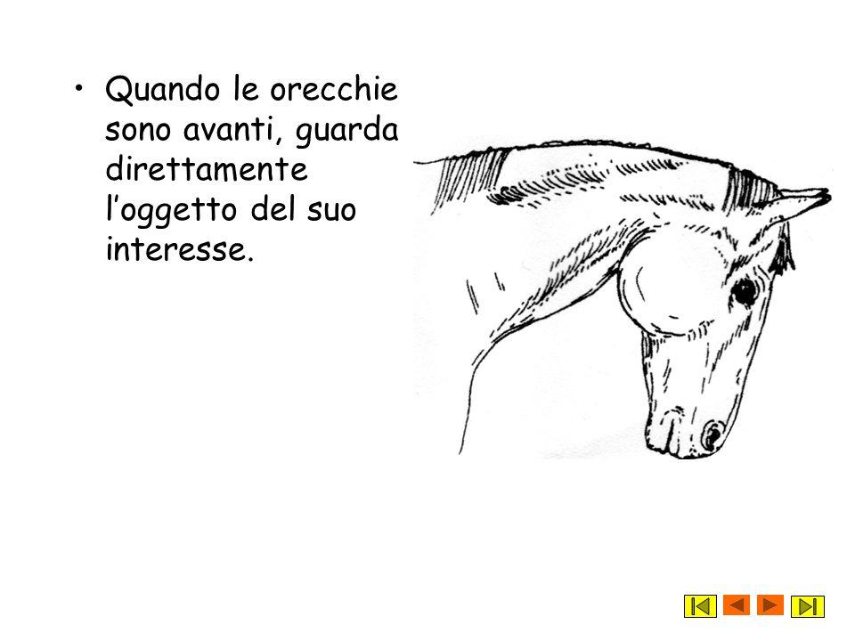 Adesso attento! Secondo te gli animali e quindi anche il cavallo, comunica con luomo? Ti aiuto! La posizione delle orecchie e della coda, oltre alla p