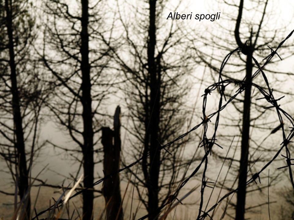 Autunno … Alberi spogli chiedono aiuto al cielo. Foglie morte coprono viali solitari. Giornate tristi e malinconiche si specchiano sul volto degli uma