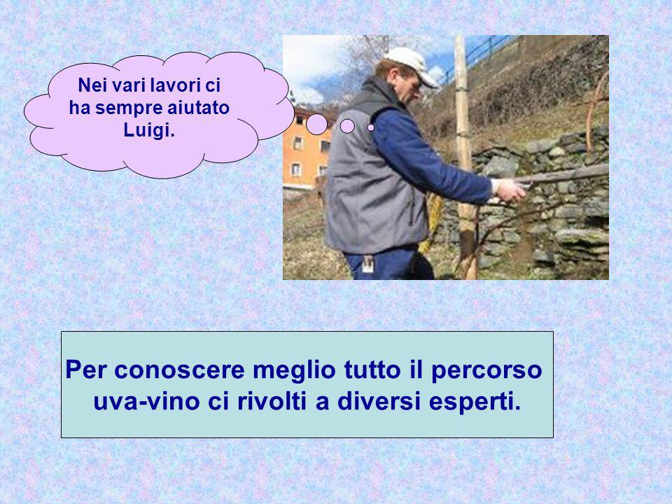 Nei vari lavori ci ha sempre aiutato Luigi. Per conoscere meglio tutto il percorso uva-vino ci rivolti a diversi esperti.