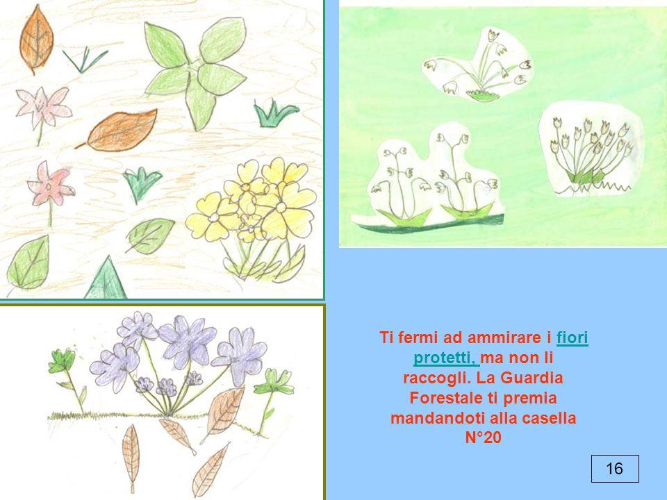 16 Ti fermi ad ammirare i fiori protetti, ma non li raccogli. La Guardia Forestale ti premia mandandoti alla casella N°20fiori protetti,
