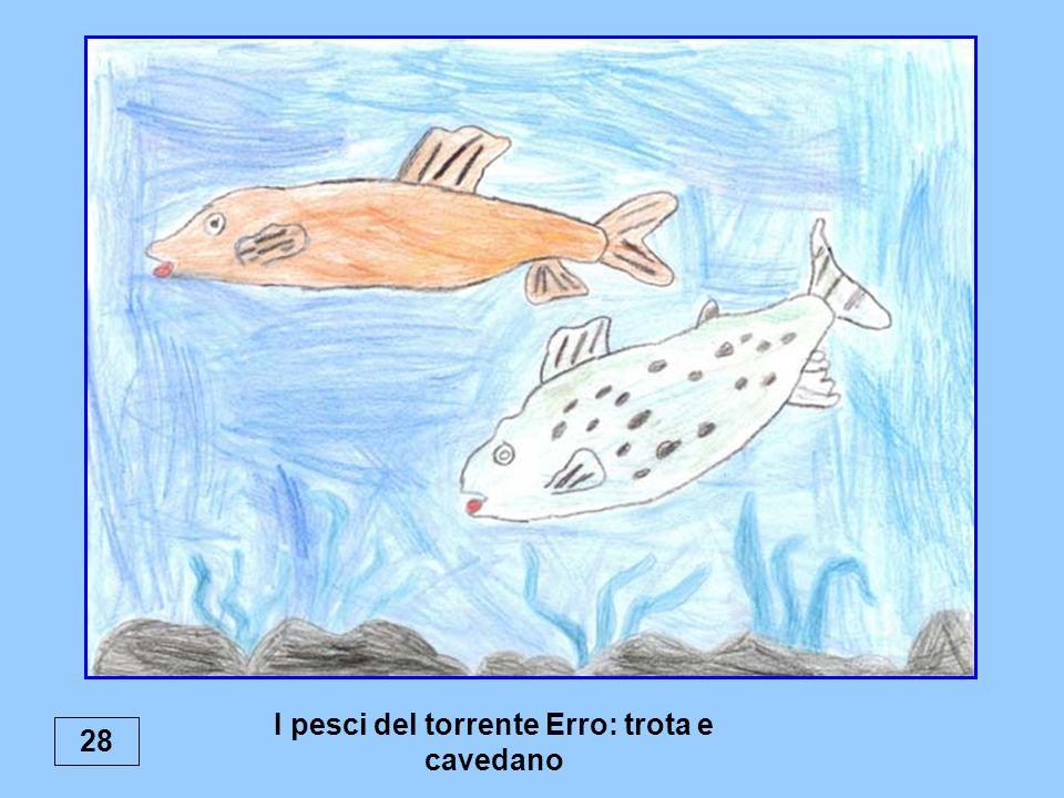 I pesci del torrente Erro: trota e cavedano 28