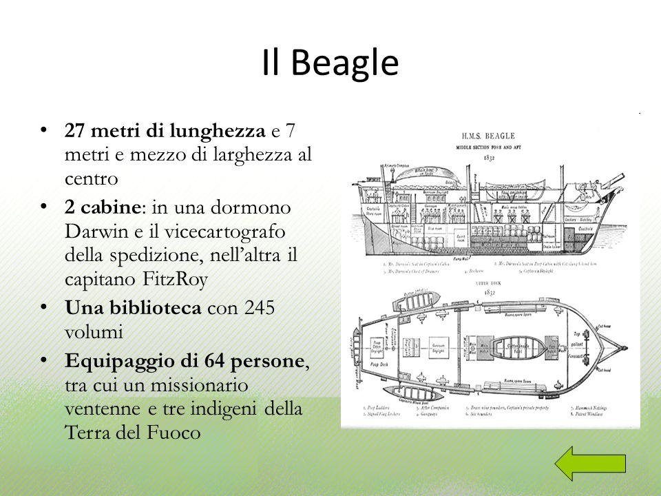 Il Beagle 27 metri di lunghezza e 7 metri e mezzo di larghezza al centro 2 cabine: in una dormono Darwin e il vicecartografo della spedizione, nellalt