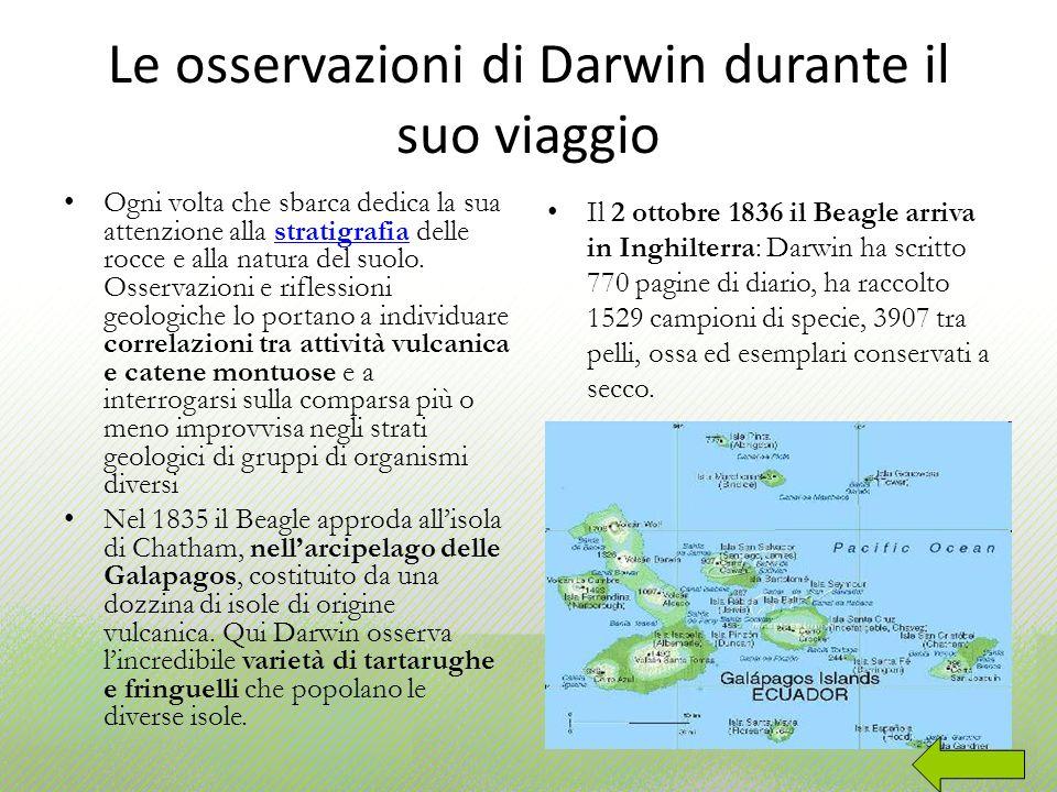 Le osservazioni di Darwin durante il suo viaggio Ogni volta che sbarca dedica la sua attenzione alla stratigrafia delle rocce e alla natura del suolo.