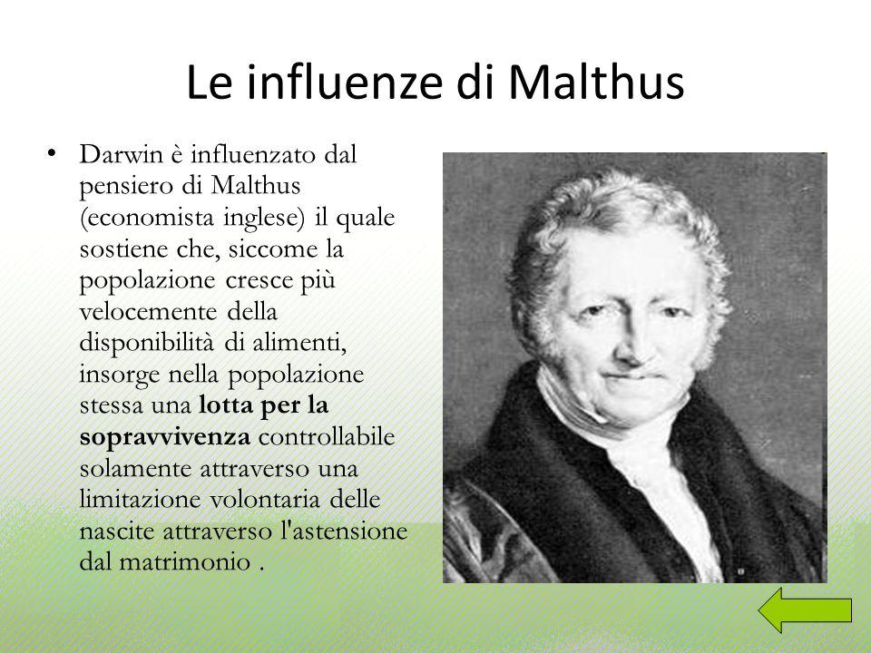 Le influenze di Malthus Darwin è influenzato dal pensiero di Malthus (economista inglese) il quale sostiene che, siccome la popolazione cresce più vel