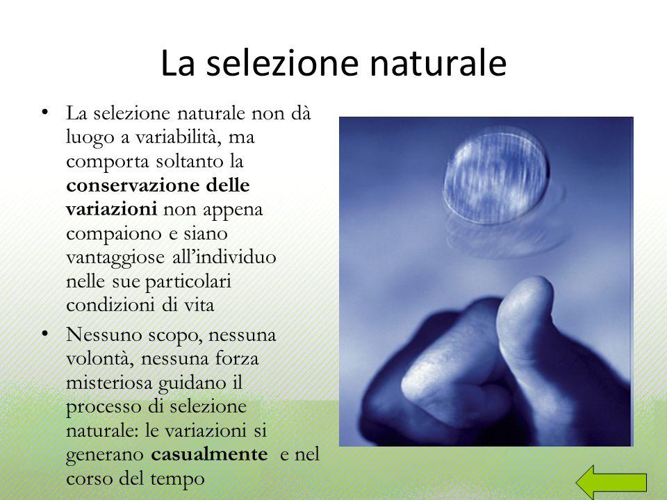La selezione naturale La selezione naturale non dà luogo a variabilità, ma comporta soltanto la conservazione delle variazioni non appena compaiono e