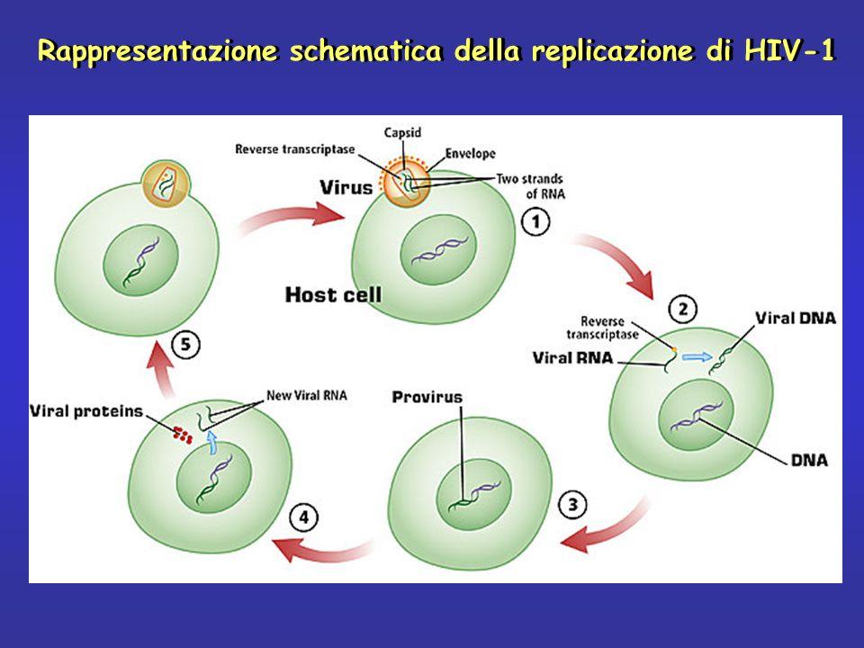 Rappresentazione schematica della replicazione di HIV-1