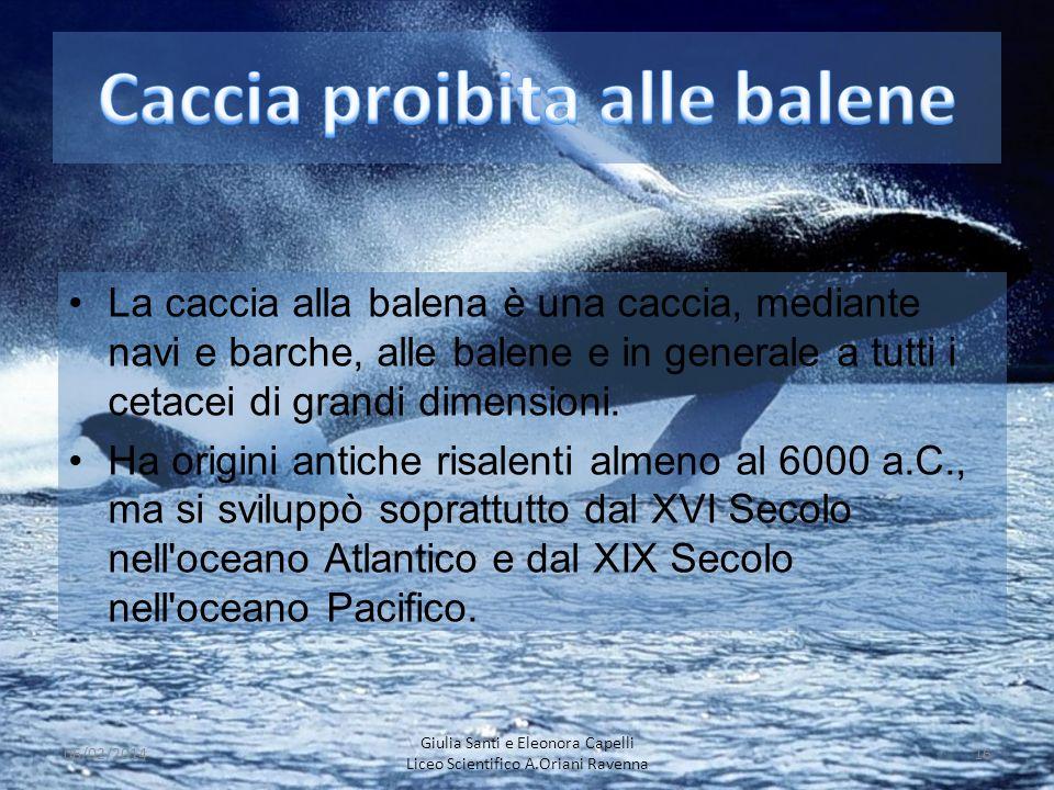 La caccia alla balena è una caccia, mediante navi e barche, alle balene e in generale a tutti i cetacei di grandi dimensioni. Ha origini antiche risal
