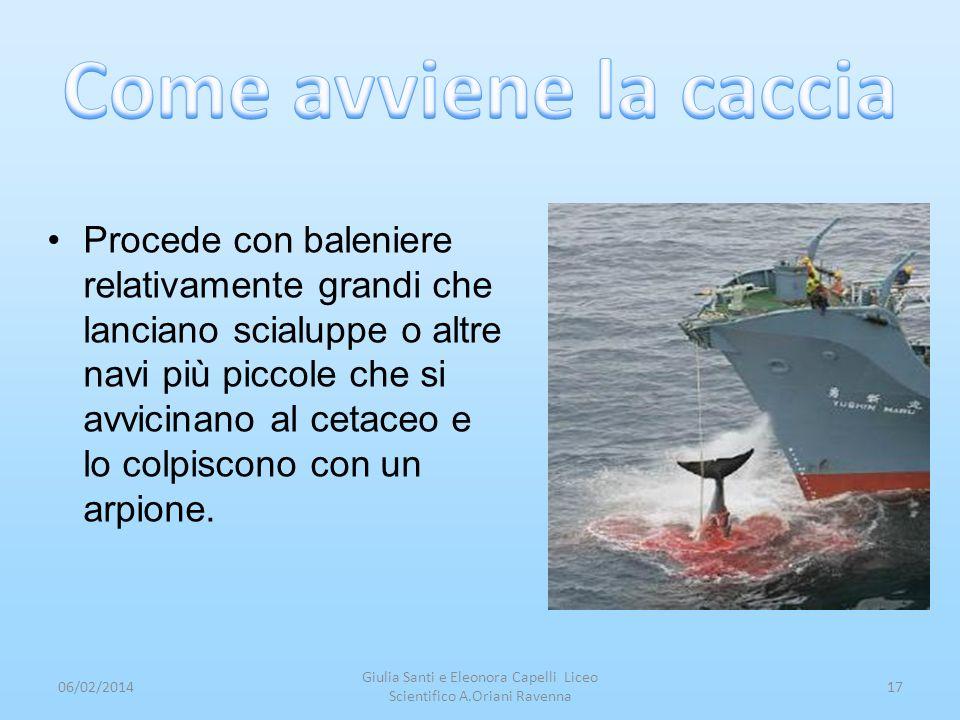 Procede con baleniere relativamente grandi che lanciano scialuppe o altre navi più piccole che si avvicinano al cetaceo e lo colpiscono con un arpione