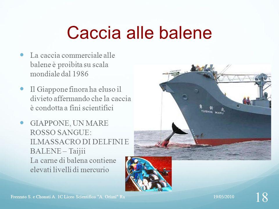 Caccia alle balene La caccia commerciale alle balene è proibita su scala mondiale dal 1986 Il Giappone finora ha eluso il divieto affermando che la caccia è condotta a fini scientifici GIAPPONE, UN MARE ROSSO SANGUE: ILMASSACRO DI DELFINI E BALENE – Taijii La carne di balena contiene elevati livelli di mercurio 19/05/2010Frezzato S.