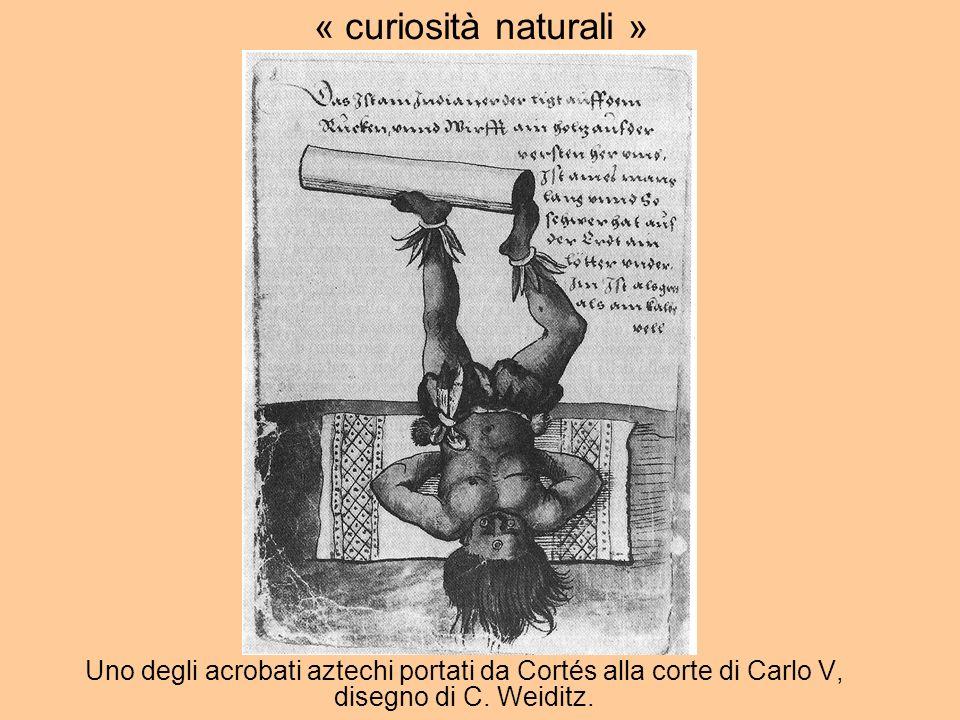 Uno degli acrobati aztechi portati da Cortés alla corte di Carlo V, disegno di C.