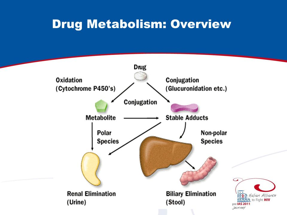 Drug Metabolism: Overview