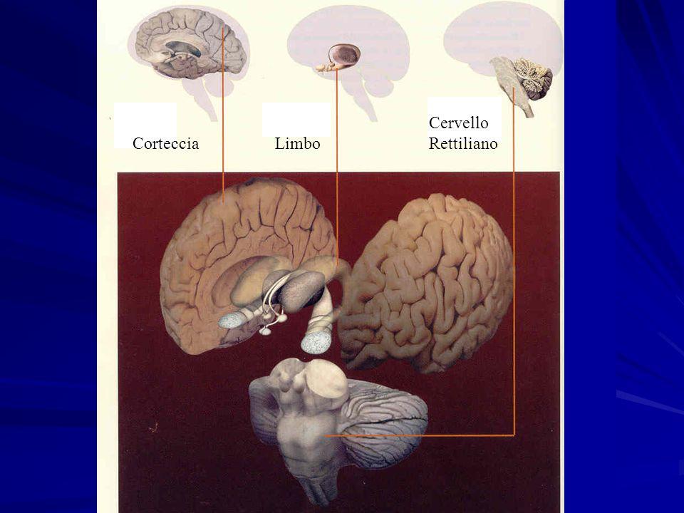 Cervello Rettiliano LimboCorteccia