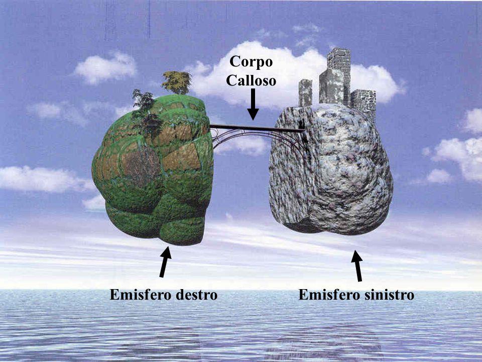Corpo Calloso Emisfero destroEmisfero sinistro