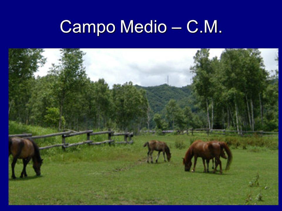 Campo Medio – C.M.