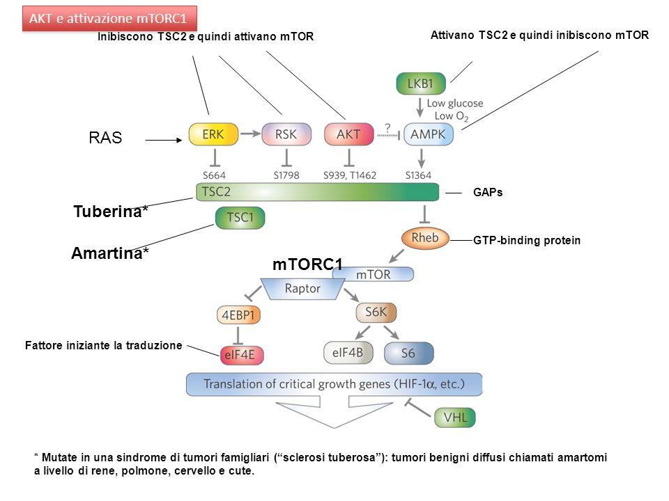 Tuberina* Amartina* * Mutate in una sindrome di tumori famigliari (sclerosi tuberosa): tumori benigni diffusi chiamati amartomi a livello di rene, pol