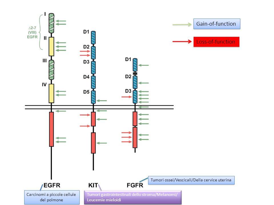 Gain-of-function Loss-of-function Carcinomi a piccole cellule del polmone Carcinomi a piccole cellule del polmone Tumori gastrointestinali dello strom
