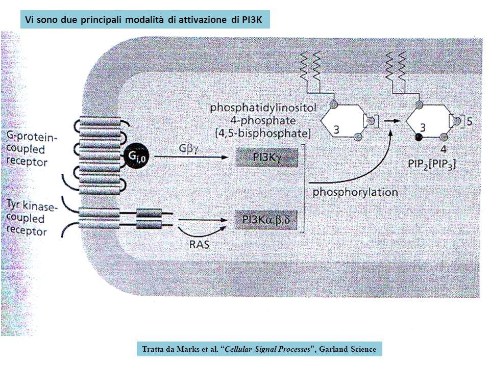 Tratta da Marks et al. Cellular Signal Processes, Garland Science Vi sono due principali modalità di attivazione di PI3K