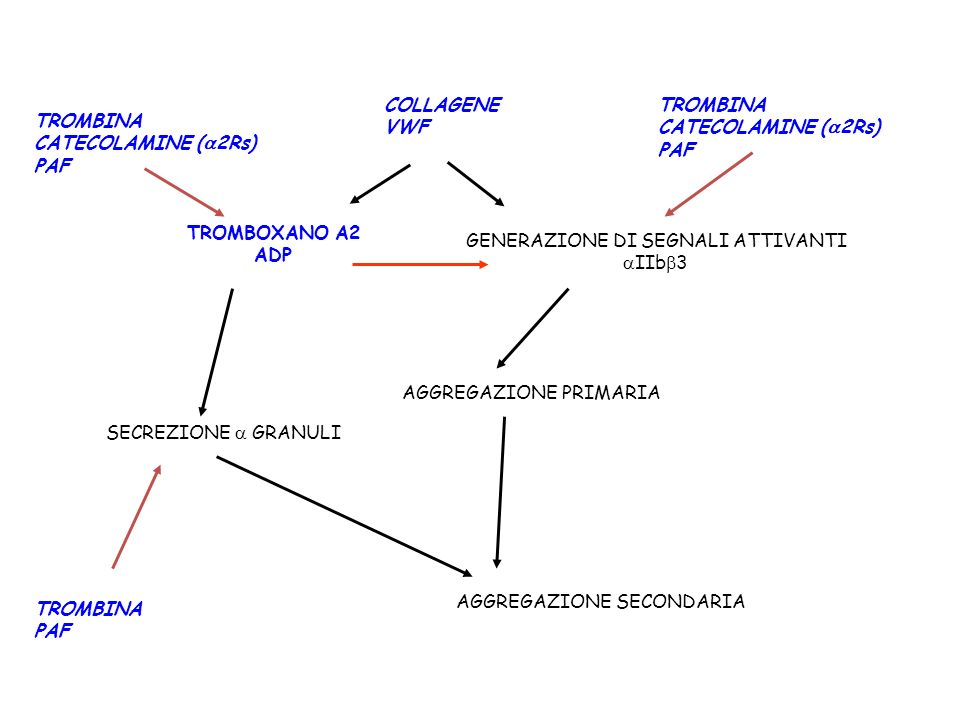 TROMBINA CATECOLAMINE ( 2Rs) PAF TROMBINA PAF GENERAZIONE DI SEGNALI ATTIVANTI IIb 3 TROMBOXANO A2 ADP SECREZIONE GRANULI AGGREGAZIONE PRIMARIA AGGREG