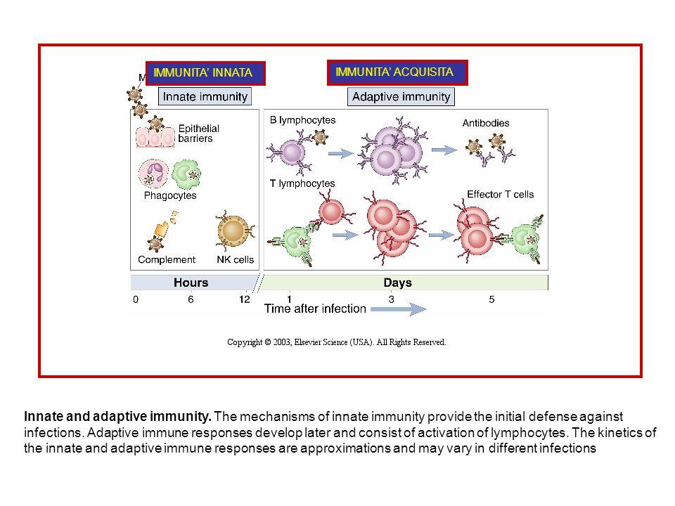 DUE TIPI DI IMMUNITA : innata o naturale: risposta precoce nei confronti dei microbi, che si basa su meccanismi ripetitivi e aspecifici.