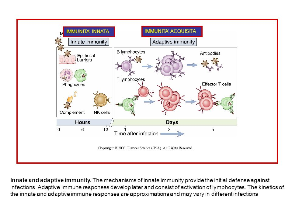 Innate and adaptive immunity.