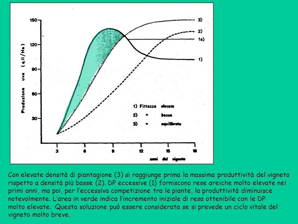 Con elevate densità di piantagione (3) si raggiunge prima la massima produttività del vigneto rispetto a densità più basse (2). DP eccessive (1) forni