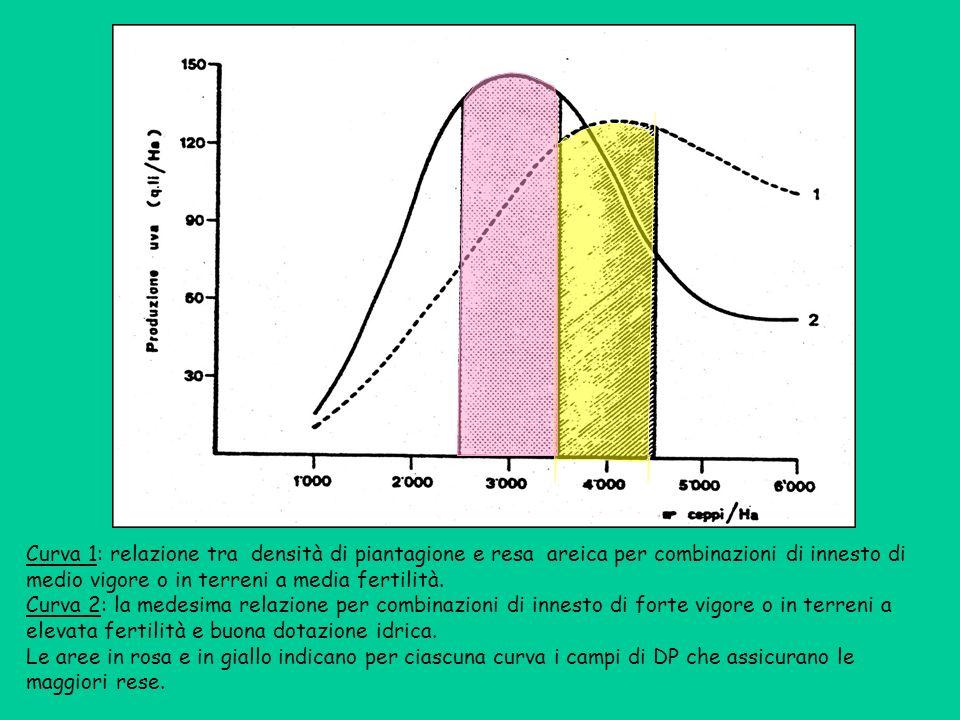 Curva 1: relazione tra densità di piantagione e resa areica per combinazioni di innesto di medio vigore o in terreni a media fertilità. Curva 2: la me