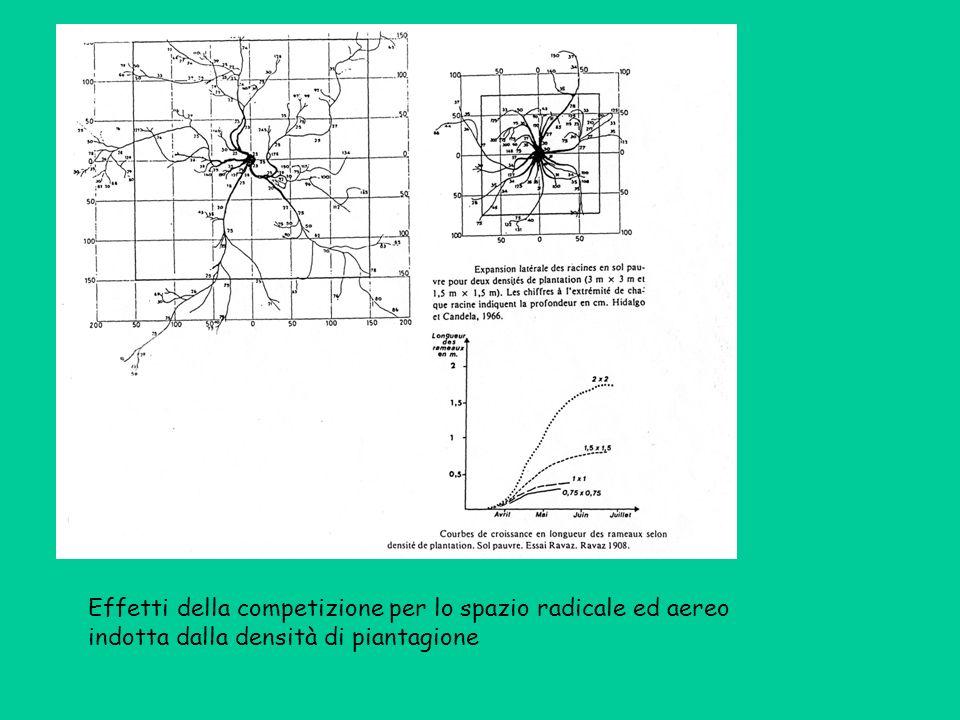 Effetti della competizione per lo spazio radicale ed aereo indotta dalla densità di piantagione