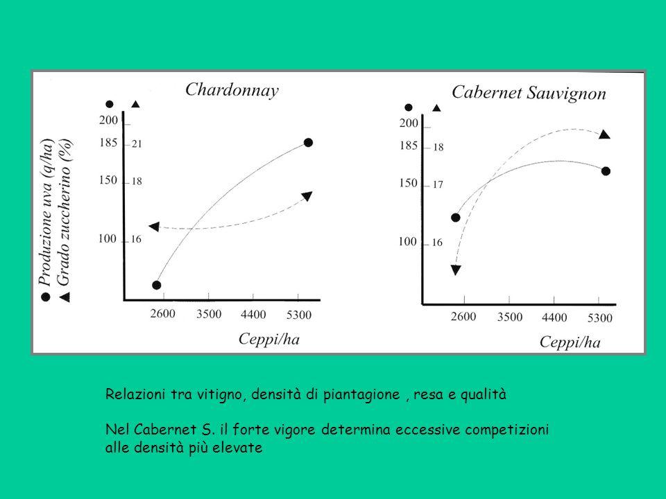 Relazioni tra vitigno, densità di piantagione, resa e qualità Nel Cabernet S. il forte vigore determina eccessive competizioni alle densità più elevat