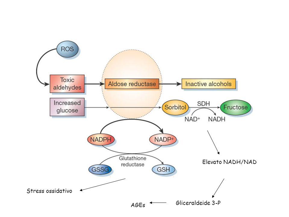 Stress ossidativo Elevato NADH/NAD Gliceraldeide 3-P AGEs