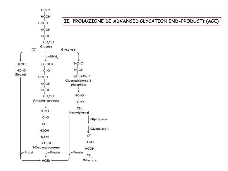 II. PRODUZIONE DI ADVANCED GLYCATION END-PRODUCTs (AGE)