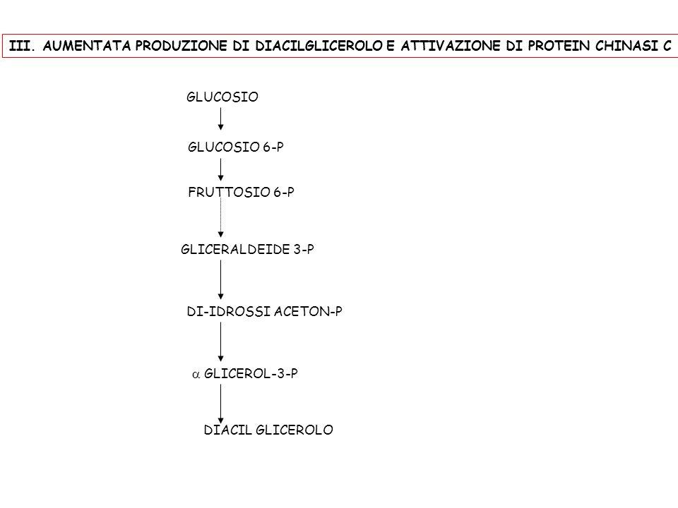 GLUCOSIO GLUCOSIO 6-P FRUTTOSIO 6-P GLICERALDEIDE 3-P DI-IDROSSI ACETON-P GLICEROL-3-P DIACIL GLICEROLO III. AUMENTATA PRODUZIONE DI DIACILGLICEROLO E