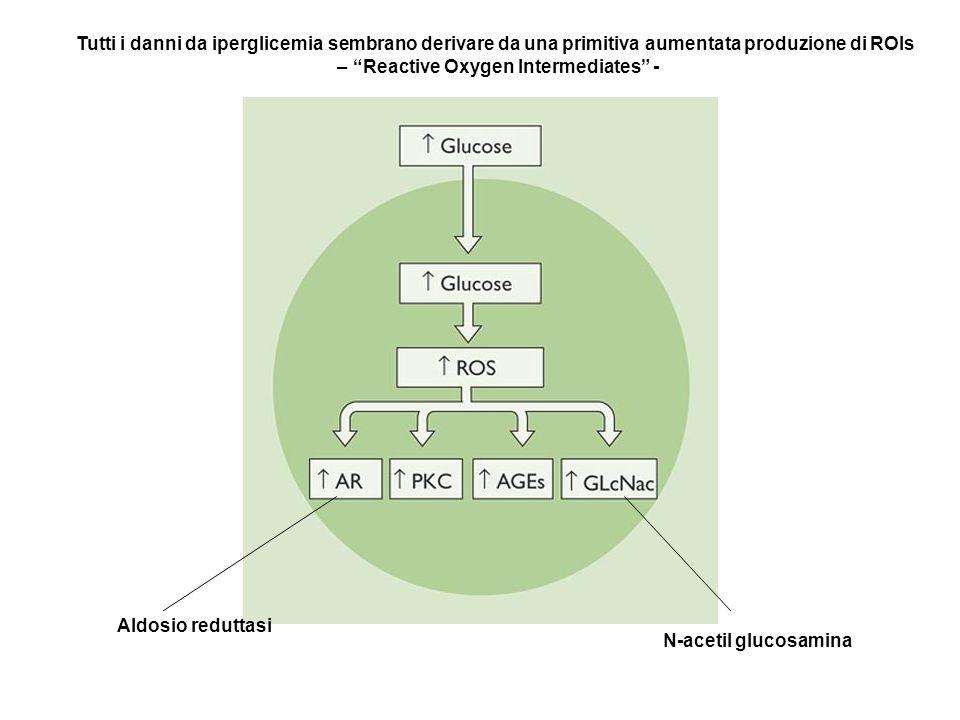 Aldosio reduttasi N-acetil glucosamina Tutti i danni da iperglicemia sembrano derivare da una primitiva aumentata produzione di ROIs – Reactive Oxygen
