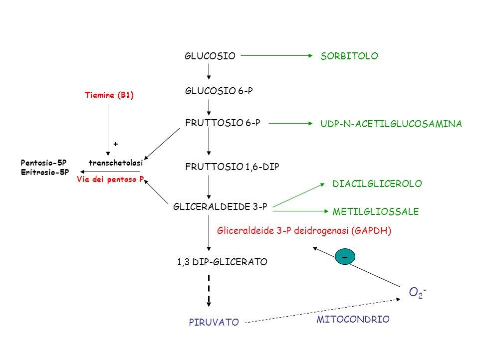 GLUCOSIO GLUCOSIO 6-P FRUTTOSIO 6-P FRUTTOSIO 1,6-DIP SORBITOLO UDP-N-ACETILGLUCOSAMINA GLICERALDEIDE 3-P 1,3 DIP-GLICERATO Gliceraldeide 3-P deidroge