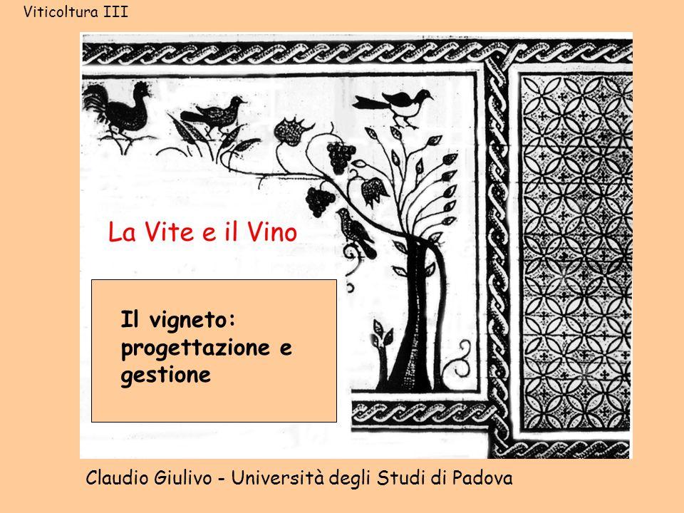 Il vigneto: progettazione e gestione Claudio Giulivo - Università degli Studi di Padova Viticoltura III