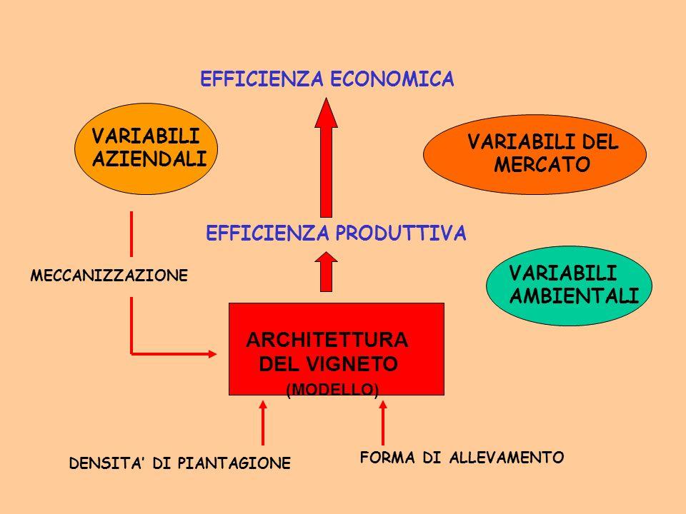 ARCHITETTURA DEL VIGNETO (MODELLO) DENSITA DI PIANTAGIONE FORMA DI ALLEVAMENTO EFFICIENZA PRODUTTIVA EFFICIENZA ECONOMICA VARIABILI AMBIENTALI VARIABI