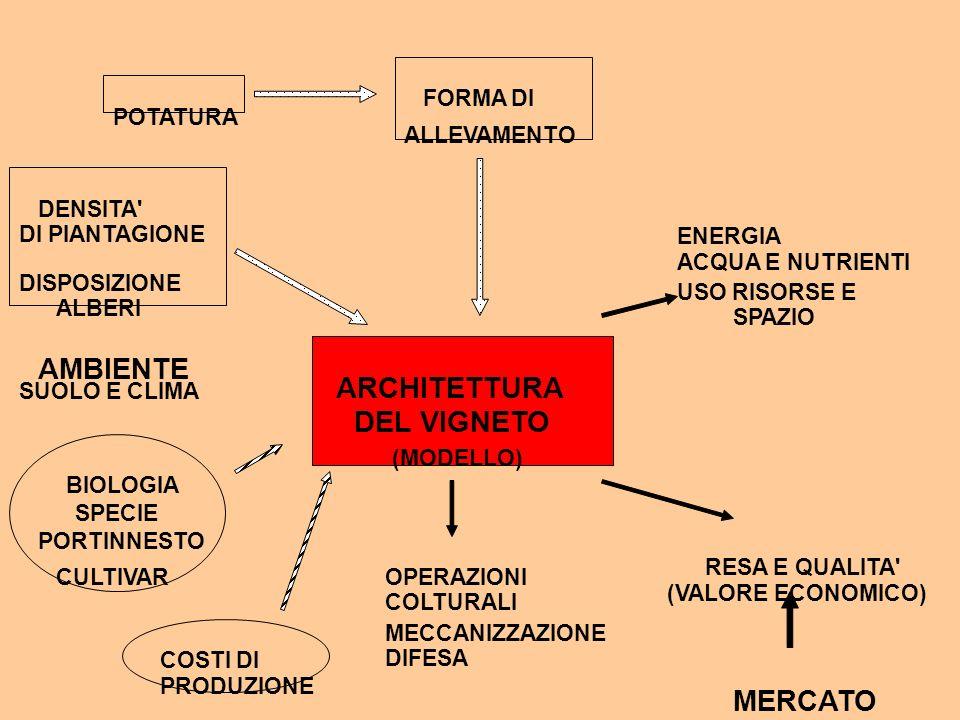 ARCHITETTURA DEL VIGNETO (MODELLO) DENSITA' DI PIANTAGIONE DISPOSIZIONE ALBERI FORMA DI BIOLOGIA SPECIE CULTIVAR PORTINNESTO COSTI DI PRODUZIONE OPERA