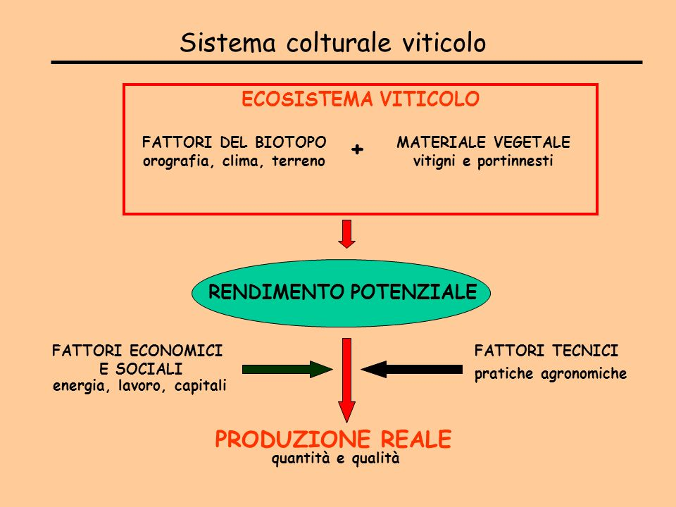 Sistema colturale viticolo FATTORI DEL BIOTOPO orografia, clima, terreno MATERIALE VEGETALE vitigni e portinnesti ECOSISTEMA VITICOLO RENDIMENTO POTEN