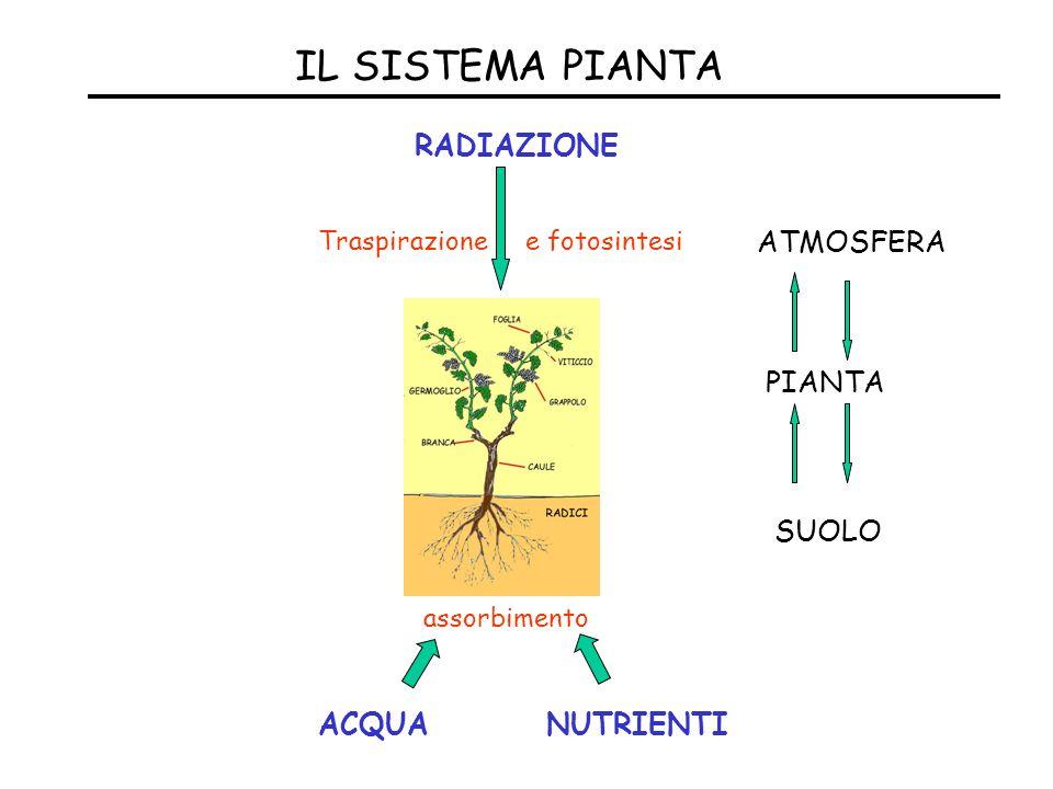 IL SISTEMA PIANTA RADIAZIONE Traspirazione e fotosintesi assorbimento ACQUANUTRIENTI SUOLO PIANTA ATMOSFERA