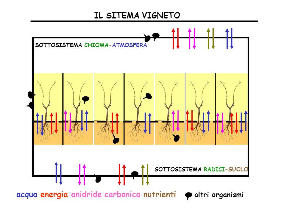 IL SITEMA VIGNETO SOTTOSISTEMA CHIOMA-ATMOSFERA SOTTOSISTEMA RADICI-SUOLO acqua energia anidride carbonica nutrienti altri organismi