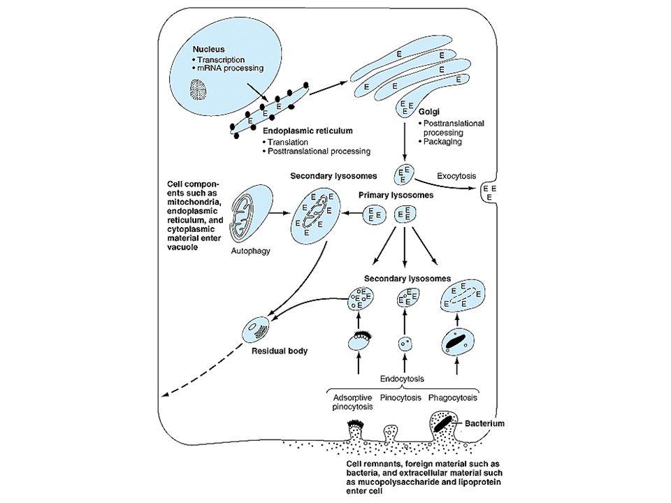 Tossina tetanica BONT B,D,F,G BONT C BONT A,C,E