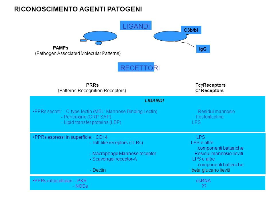 PAMPs (Pathogen Associated Molecular Patterns) PRRs (Patterns Recognition Receptors) Fc Receptors C Receptors IgG C3b/bi LIGANDI RECETTORI LIGANDI PPR