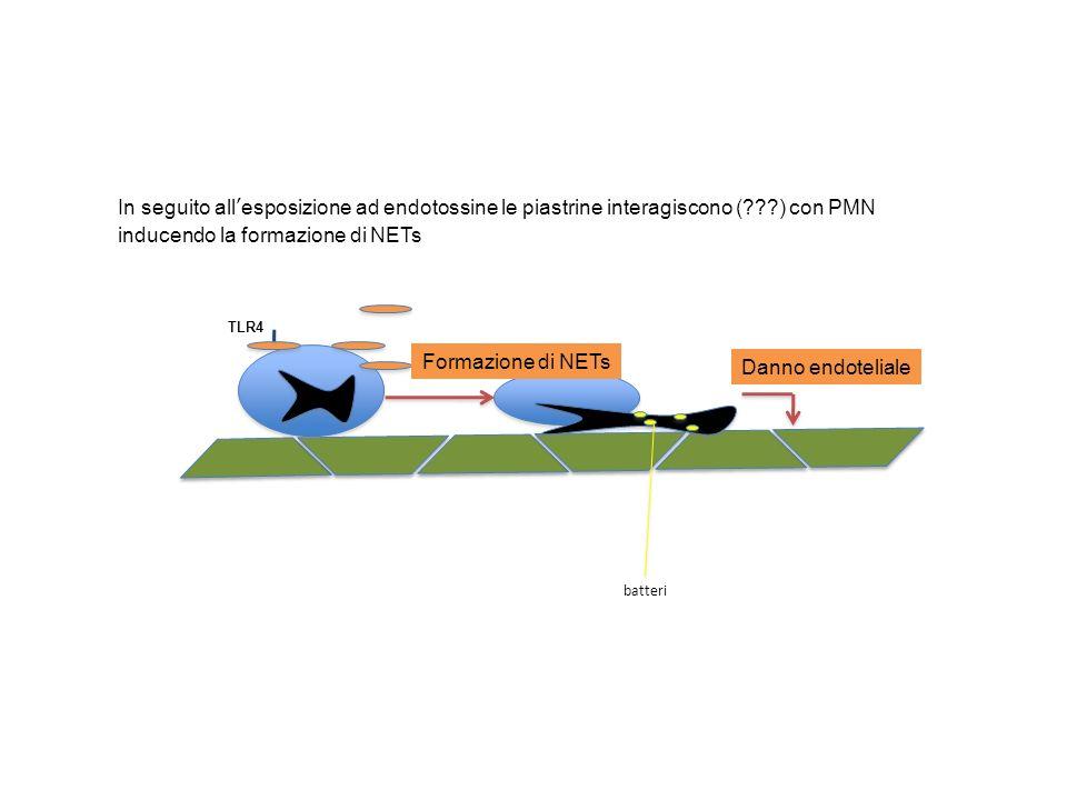 Formazione di NETs Danno endoteliale In seguito allesposizione ad endotossine le piastrine interagiscono (???) con PMN inducendo la formazione di NETs