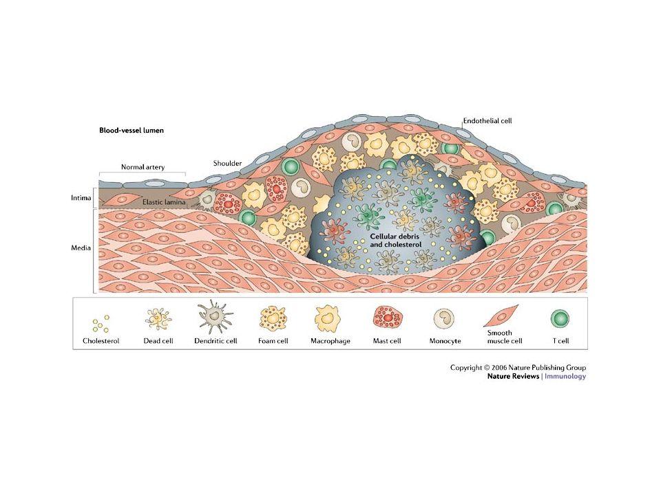Formazione di NETs Danno endoteliale In seguito allesposizione ad endotossine le piastrine interagiscono (???) con PMN inducendo la formazione di NETs TLR4 batteri