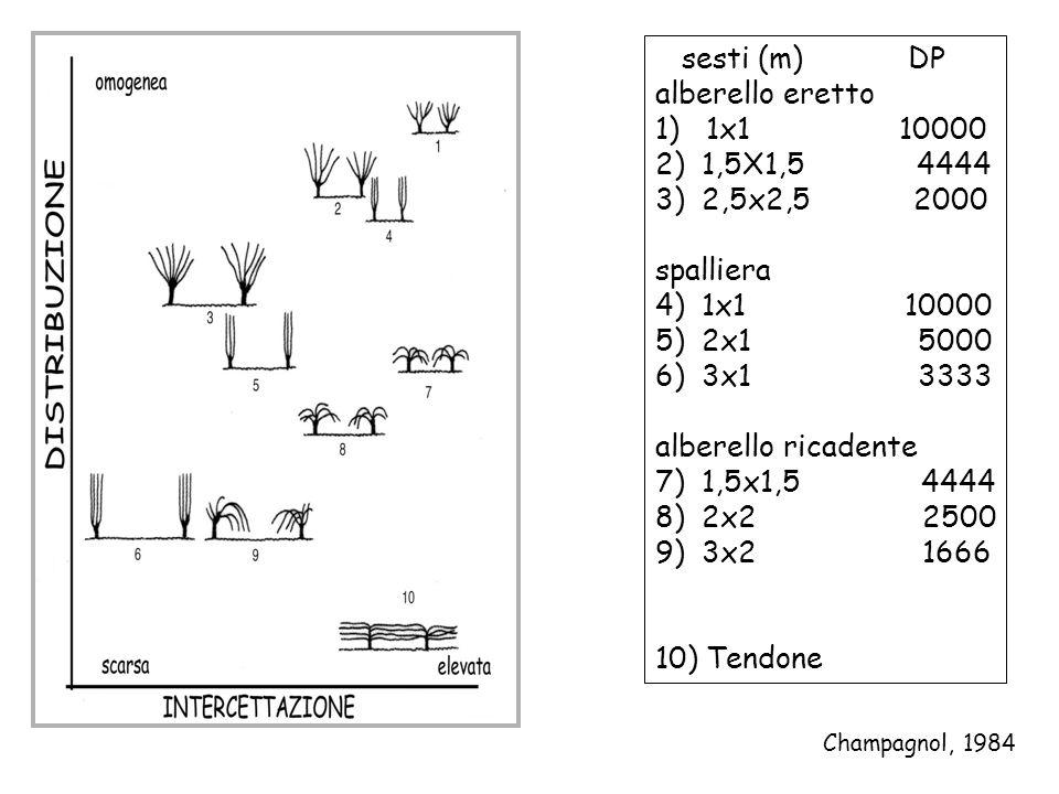 sesti (m) DP alberello eretto 1) 1x1 10000 2) 1,5X1,5 4444 3) 2,5x2,5 2000 spalliera 4) 1x1 10000 5) 2x1 5000 6) 3x1 3333 alberello ricadente 7) 1,5x1,5 4444 8) 2x2 2500 9) 3x2 1666 10) Tendone Champagnol, 1984