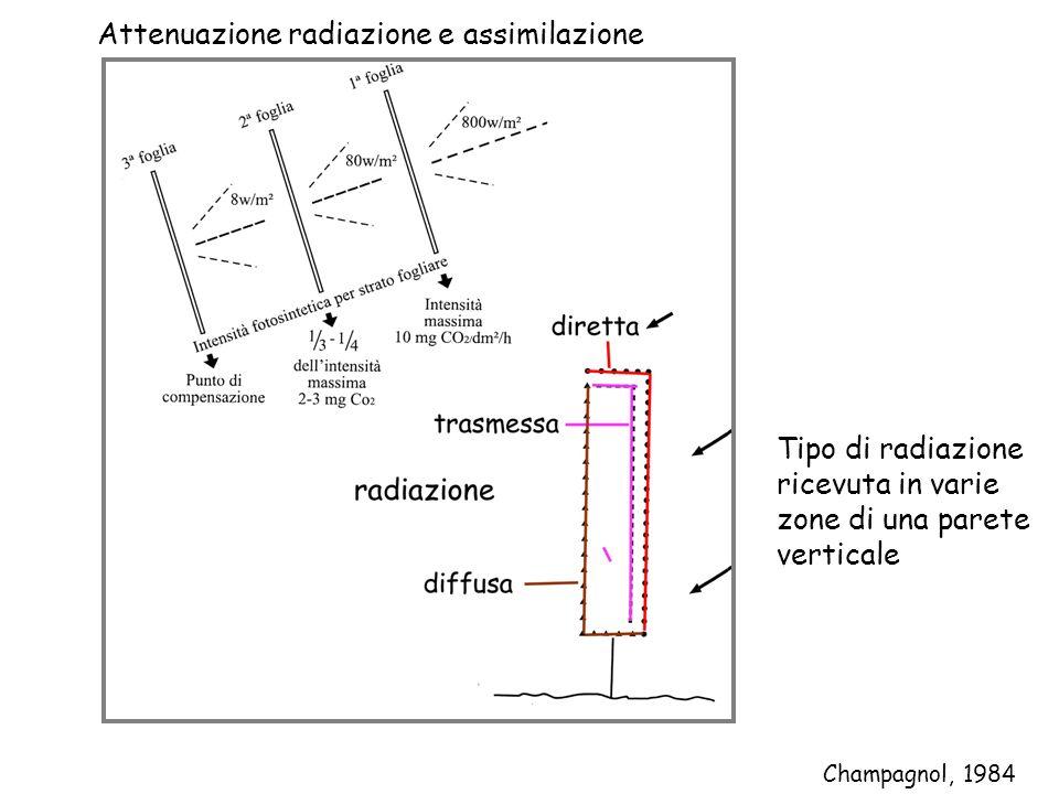 Champagnol, 1984 Attenuazione radiazione e assimilazione Tipo di radiazione ricevuta in varie zone di una parete verticale
